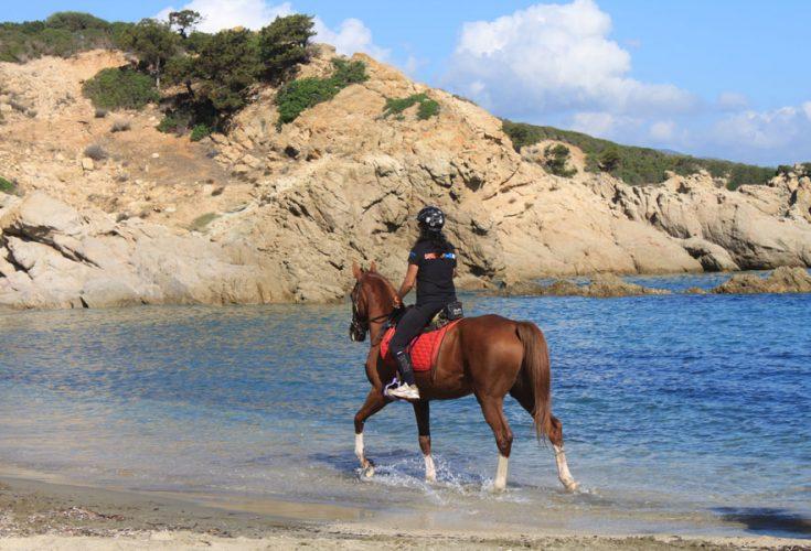 cavallo11